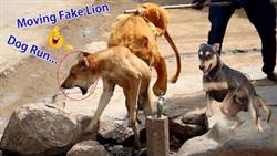 Big Fake Lion Dog Prank Must Watch Funny Video Just For Fun Try Not To Laugh Funny Dog Reaction 2021