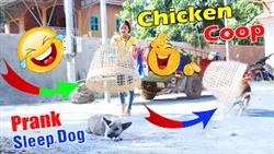 Chicken Coop Vs Big Box Prank Dog In Pets Videos Funny ?????? Very Funny With Surprise Scared Reaction